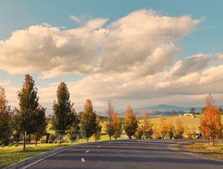 風景,空,木,草原,雲,日差し,旅行,オーストラリア,Sky,blue,メルボルン,tree,秋空,秋色,インスタ映え,秋空の下