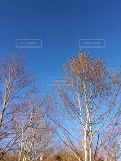 風景,空,秋,森林,木,青空,癒し,マイナスイオン,群馬,グラデーション,秋空,赤城山,bluesky,散策,秋色,赤城,風景写真,陽ざし,インスタ映え
