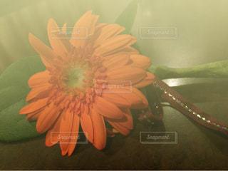 花の写真・画像素材[389578]