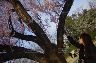 春 - No.410211