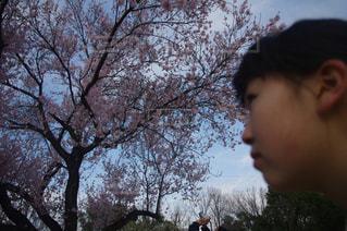 春の写真・画像素材[412037]