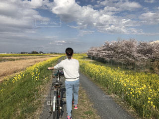 自転車,菜の花,サイクリング