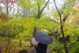 傘の写真・画像素材[848725]