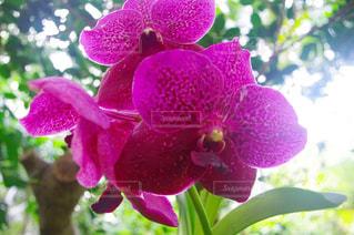 近くの花のアップの写真・画像素材[1126452]