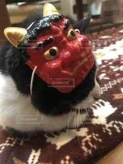 猫,ねこ,鬼,節分,豆まき,赤鬼,恵方巻,白黒猫,はちわれねこ,鬼の仮面