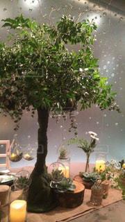 インテリア,木,植物,癒し,装花,電球プランター