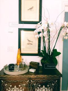 インテリア,装飾,胡蝶蘭