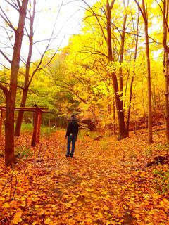 木の隣に立っている男の写真・画像素材[841970]