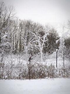 雪の木の写真・画像素材[910839]
