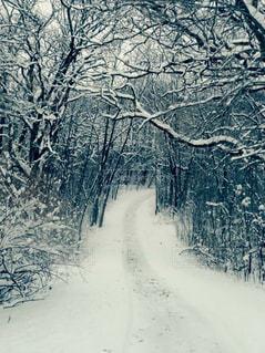 地面の雪の木の写真・画像素材[910847]
