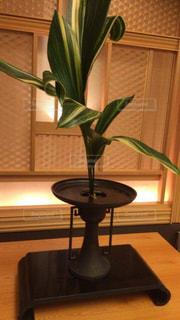 植物,装飾,和風,フラワーアレンジ,飾り