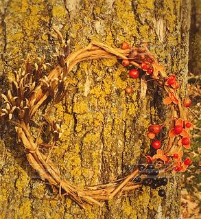 植物,リース,フラワーアレンジ,飾り,森の中