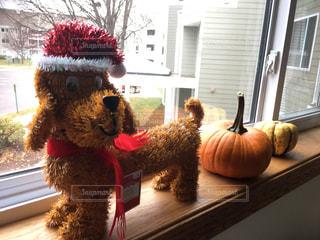 犬,冬,クリスマス,サンタ,クリスマスグッズ