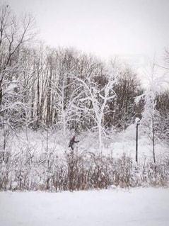 冬,雪,白,クリスマス,スキー,ウィンタースポーツ,クロスカントリー