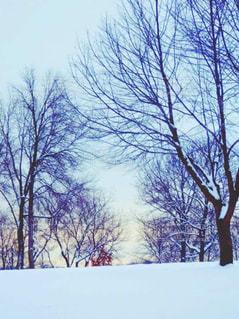 近くの木のアップの写真・画像素材[937616]