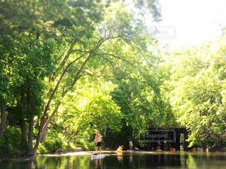 水の体の横にあるツリーの写真・画像素材[1170000]