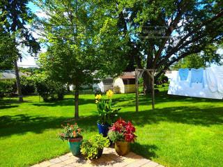 幾つかの草の上に座って芝生椅子カバー フィールドの写真・画像素材[1170057]