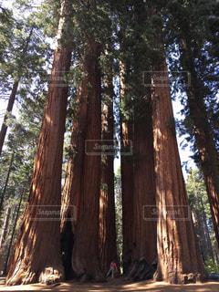 大きな木の下 - No.766538