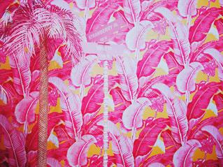 ピンクのヤシの木の写真・画像素材[801576]