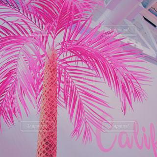 ピンクのパームツリー アイスクリームのコーンの写真・画像素材[842870]