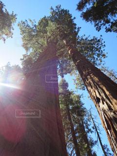木の側のビュー - No.996910