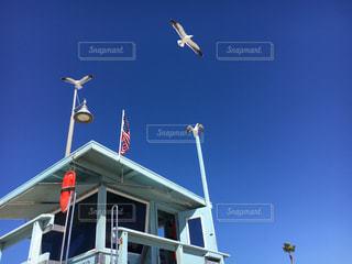 建物に凧の飛行の人々 のグループの写真・画像素材[1027695]