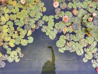 近くの花のアップの写真・画像素材[1043792]