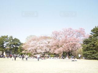皇居のとなりにある公園の桜の木の下でお花見を楽しむ人々・グループ・観衆の写真・画像素材[1130033]