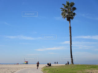 青空とヤシの木とカリフォルニア・ベニスビーチと人々と🇺🇸の写真・画像素材[1132286]