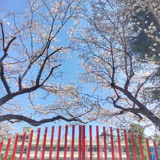 学校の校門と桜の木のしたでの写真・画像素材[1137759]