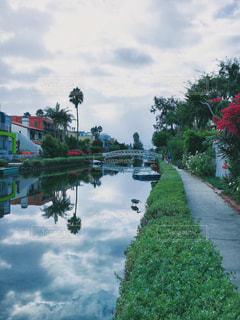 2分割構図 ベニス運河 くもり ヤシの木 アメリカ カリフォルニア ベニス カナル ロサンゼルス ロスの写真・画像素材[1217328]