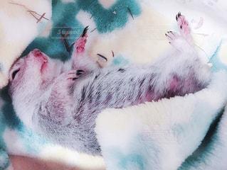 リチャードソンジリス リス ぬいぐるみの動物のグループの写真・画像素材[1326074]