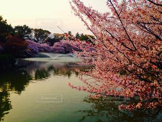 春の写真・画像素材[403247]