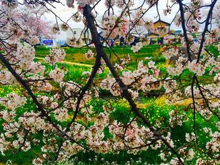 春の写真・画像素材[403253]