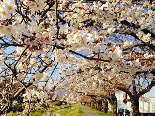 春の写真・画像素材[403255]