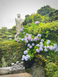 花の写真・画像素材[561169]