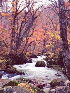 森の中の大きな滝の写真・画像素材[849263]