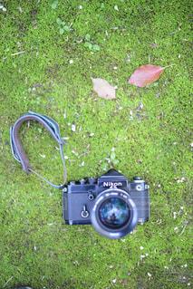 緑の写真・画像素材[459267]
