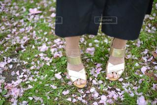桜の写真・画像素材[459270]