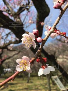 春の写真・画像素材[401914]