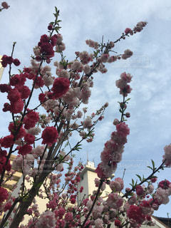 春 - No.424521