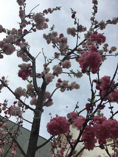 春 - No.424524