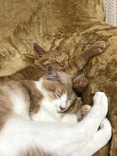 猫の写真・画像素材[393150]