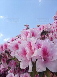 花の写真・画像素材[402811]