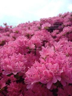 花の写真・画像素材[402813]