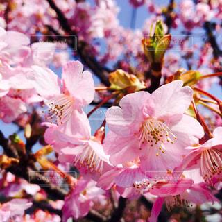 花の写真・画像素材[402832]