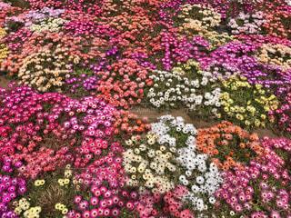 植物にピンクの花の写真・画像素材[1036518]