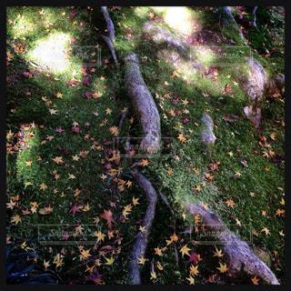 近くの木のアップの写真・画像素材[1036523]