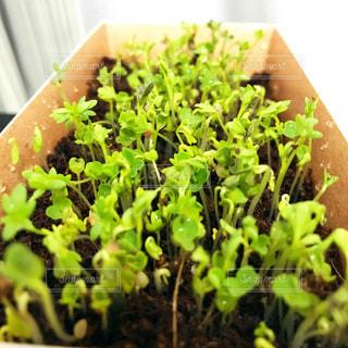 近くのグリーン サラダの写真・画像素材[1036589]
