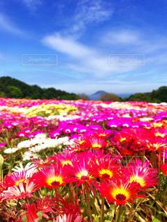 カラフルな花の植物の写真・画像素材[1050057]